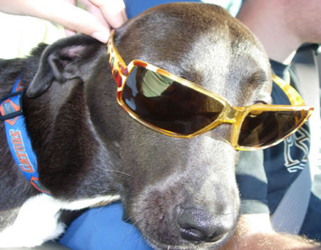 The coolest dog I ever knew.