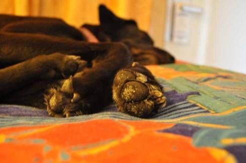 Rudi feet